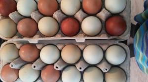 buy eggs 3